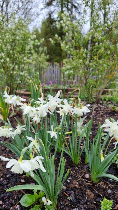 Blommor i Chakraträdgården