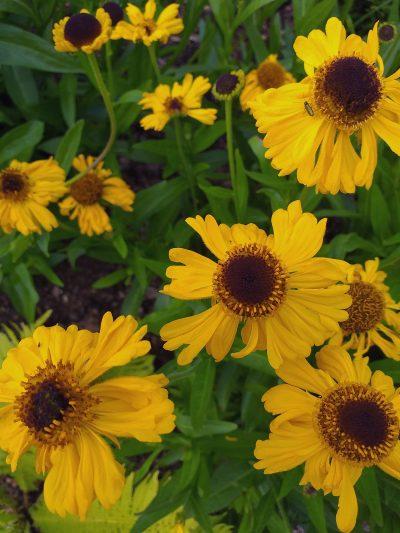 gula blommor i solar plexus rummet