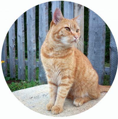 katt som sitter på en sten